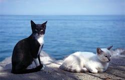 коты bw Стоковые Фотографии RF