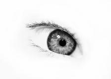 BW beautiful eye royalty free stock photos