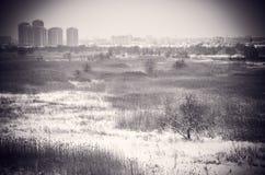 BW Bevroren de Winter Sneeuwlandschap Vacaresti Deltaboekarest Stock Fotografie