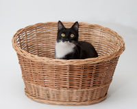 BW cat in the basket isolated Stock Photo