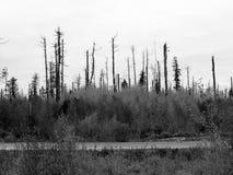 BW del otoño Imagenes de archivo