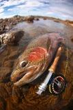 BW del particolare della coda della trota iridea Fotografie Stock Libere da Diritti