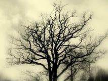 Bw della siluetta dell'albero fotografia stock