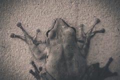 BW des Frosches Lizenzfreie Stockfotos