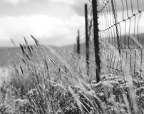 BW Fence and Field Stock Photography