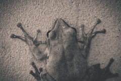 The BW of frog royalty free stock photos