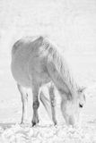 Bw horse in winter Stock Photos