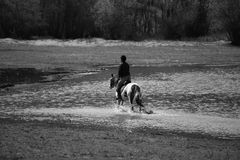 Bw image with man and horse Royalty Free Stock Photo