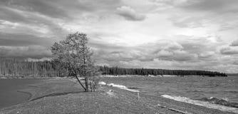 BW - L'arbre sur le banc de sable a appelé Hard Road de suivre sur les banques du lac Yellowstone en parc national de Yellowstone photographie stock libre de droits