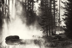 Bw lake details. Misty black and white lake details in sunrise time Royalty Free Stock Photos