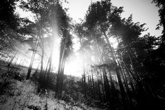 Bw landscape Royalty Free Stock Images