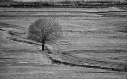 Bw landscape with tree in meadows Royalty Free Stock Photos