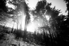 Bw-Landschaft Lizenzfreie Stockbilder