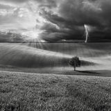 BW-Landschaft mit Baum auf Feld Stockfotos