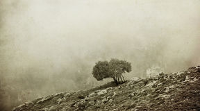 Bw misty landscape Royalty Free Stock Photos