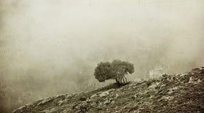 Bw misty landscape Royalty Free Stock Photos