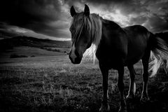 Bw-Pferd und -himmel Stockfoto