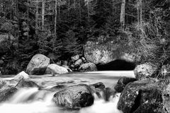 Bw river in deep forest Stock Image