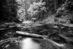Bw rivier Stock Afbeeldingen
