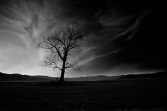 Bw spooky tree. Abstract black and white high contrasted low key horror landscape with alone spooky tree Stock Images
