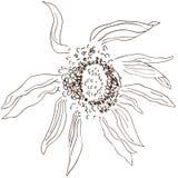 BW Sunflower sketch Stock Photos