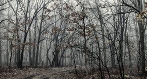 BW svartvit morgon i lövverket för skog för höst för höstskog den livliga Fotografering för Bildbyråer