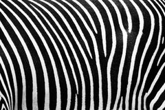 BW texture of zebra Royalty Free Stock Photo