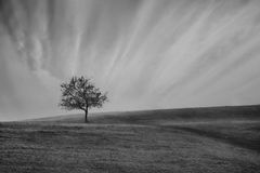 Bw tre in meadows Royalty Free Stock Images