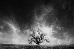 Bw tree Royalty Free Stock Images