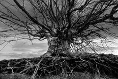 Bw tree Royalty Free Stock Photo