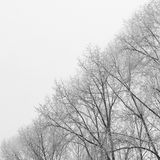 BW Tree Branches Split Picture by Two Half. Ying Yang Black and Royalty Free Stock Photo
