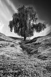 Bw tree landscape Royalty Free Stock Photo