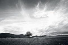 Bw tree landscape Royalty Free Stock Photo