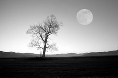 Bw tree and moon Royalty Free Stock Photo