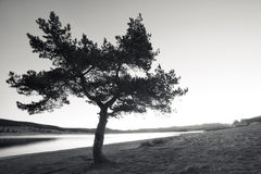 Bw tree in the morning Stock Images