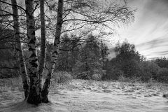 Bw winter landscape Royalty Free Stock Photos