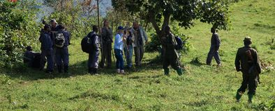 bwindi森林 免版税库存图片