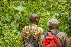 Free Bwindi Impenetrable Forest National Park / Uganda - March 03 2020: Rangers Searching For Mountain Gorillas For A Habituation Exper Royalty Free Stock Photography - 205705157