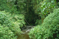 Bwindi Impenetrable Forest in Uganda Stock Image