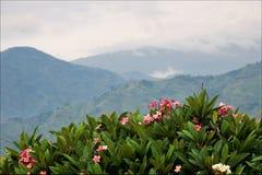 bwindi lasu góry Fotografia Royalty Free