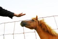 być odizolowani migdalącym być koniem Obrazy Royalty Free