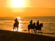 Free By Mounting A Horse In A Summer Afternoon In Piura Stock Images - 8784474