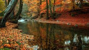 Byala reka 1. Byala reka river in Central Balkan National Park(Stara planina mountain stock images