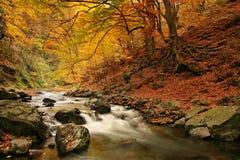 Byala reka. River in Central Balkan National Park(Stara planina mountain stock photo