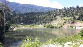 Bybehållaren med den omgivna skogen och kokosnöten gömma i handflatan Arkivfoton