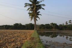 Bybondeland med sockerröret och kokospalmen royaltyfria foton