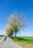 Bycicle lane under blooming tree Stock Images