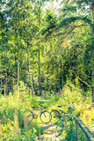 Bycicles in a green forest Stock Photography