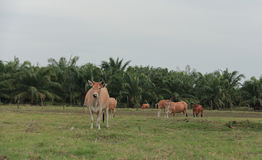 Bydło żywieniowy rancho Fotografia Royalty Free