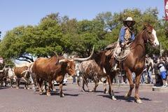 Bydło Fort Worth i kowboje Obraz Royalty Free